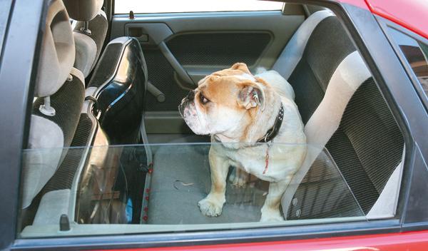 Viajar con el perro en el coche. Ejemplo de perro en asientos traseros del coche