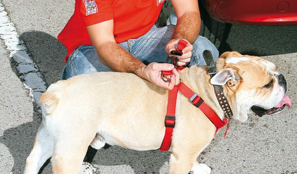 Viajar con el perro en el coche. Arnés de sujección con barras fijas para el perro