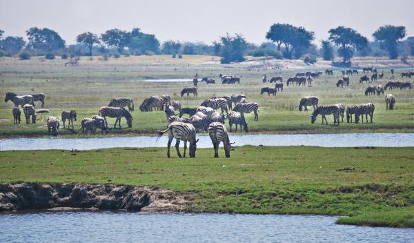 Rio Okavango en Botsuana