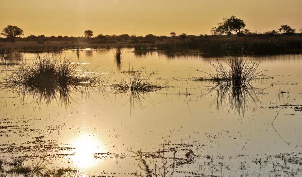 Rio Okavango en Botsuana al atardecer