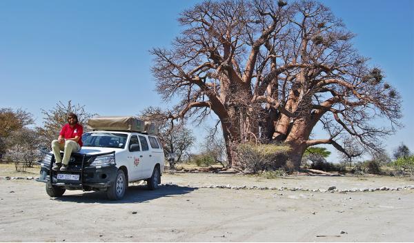Toyota Hilux y baobab en Botsuana