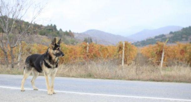Perro-Carretera