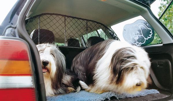 transportar perros coche