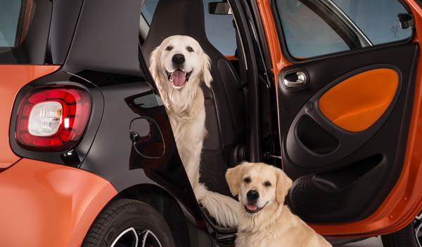 la polic a salva a un perro de morir asfixiado en un coche. Black Bedroom Furniture Sets. Home Design Ideas