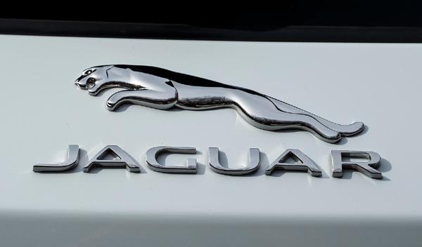 Logo marca coche Jaguar