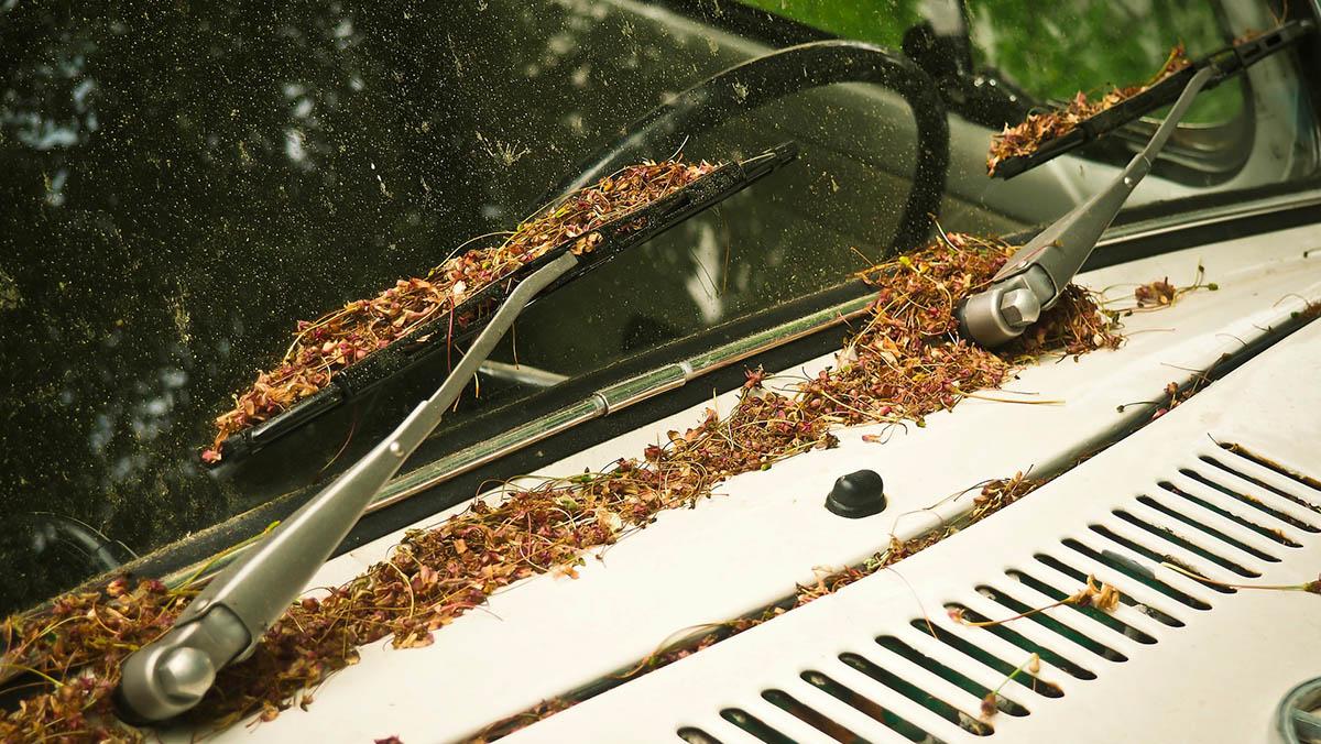 ¿Está tu coche preparado para el otoño? Vigila los limpiaparabrisas