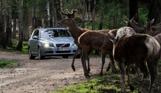 Qué hacer si te encuentras un animal en la carretera