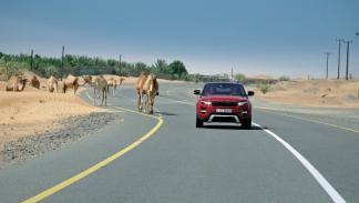 range-rover-evoque-dubai-frontal-camello