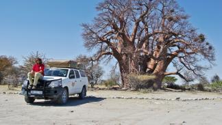 Hilux Baobab