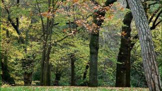El Parque del Capricho