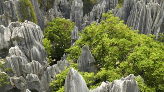 bosque piedra china