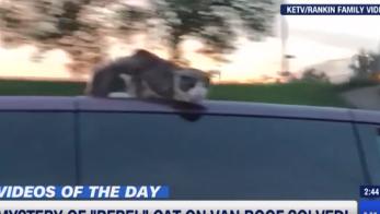 VÍDEO: Este cato sobrevive a ir en el techo del coche a 100 km/h
