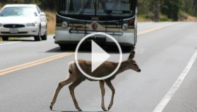 Un ciervo atraviesa la luna de un autobús en Estados Unidos