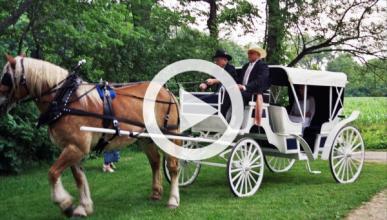 Vídeo: un 'carruaje' de caballos choca contra un coche