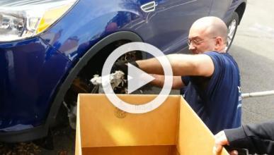 Descubre un nido de ardillas en su coche