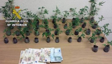 Detenido por llevar 42 plantas de marihuana en el maletero