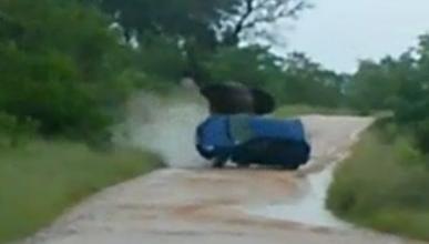 Un elefante enfurecido ataca y vuelca un coche