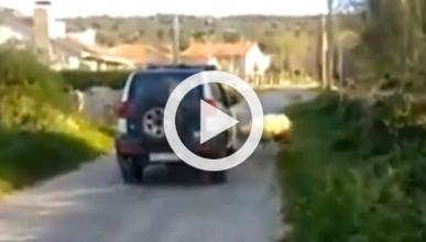 Un carnero ataca un coche de la Guardia Civil