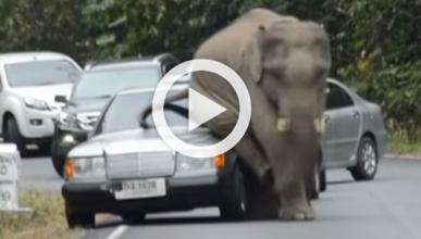 Un elefante con picores destroza varios coche al rascarse