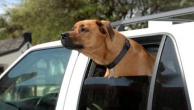 Venganza: un perro muerde el coche de un hombre que le pegó