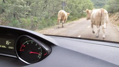 Así evitará el coche de Google a vacas y otros obstáculos