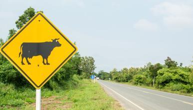 Los signos del Zodiaco más peligrosos al volante
