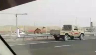 La otra cara de Dubai: del lujo a perseguir un camello