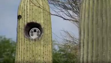 Instalan lectores de matrículas escondidos en cactus