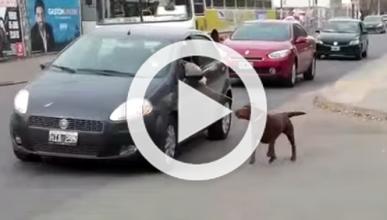 Vídeo: no saques así a tu perro o te caerá una multa