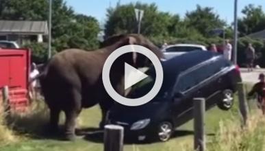 Un elefante se escapa del circo y destroza un coche
