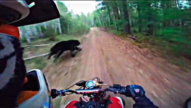 Video: haciendo enduro con un.. ¡oso!