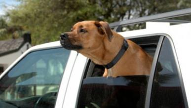 Una jauría de perros salvajes 'devora' un Toyota RAV4