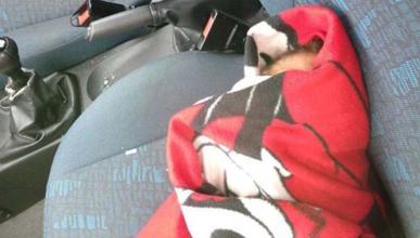 La que monta un bebé 'Reborn' en un coche