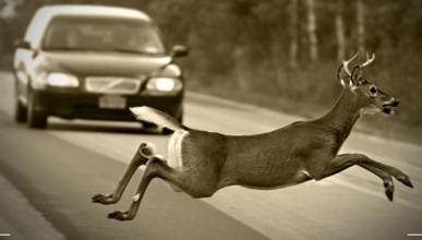 Lo que te puede costar atropellar un animal de caza