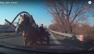 Vídeo: un caballo choca de frente con un coche