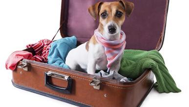 Cómo llevar a tu mascota de viaje de forma segura y legal