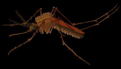 ¿Por qué los mosquitos te pican a ti (y no a los demás)?