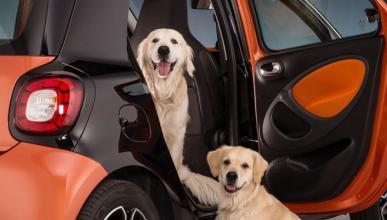 La policía salva a un perro de morir asfixiado en un coche