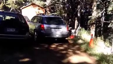 Vídeo: ¿un oso dentro de un Subaru?