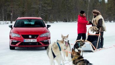 Seat León Cupra vs Huskies