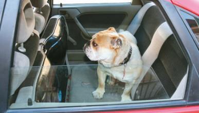 El bulo de la ventanilla y el perro encerrado en el coche