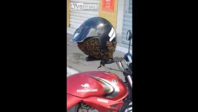Vídeo: Unas abejas devoran un casco de moto en plena calle