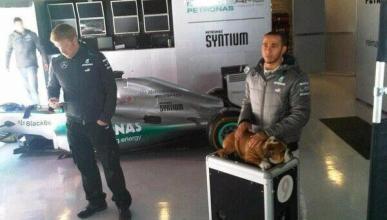 Roscoe, el perro de Lewis Hamilton, un bulldog en la F1