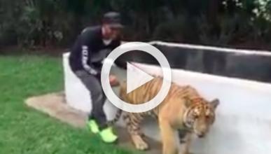 Vídeo: la última locura de Lewis Hamilton con un tigre