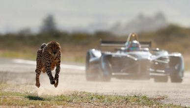 Fórmula E vs guepardo