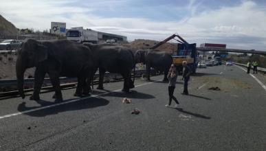 Elefantes en carretera de Albacete