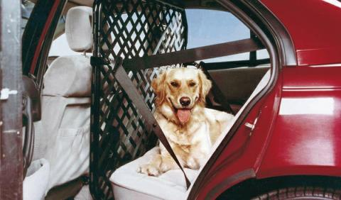Consejos para viajar con animales, colocar el equipaje y la carga al viajar con perro
