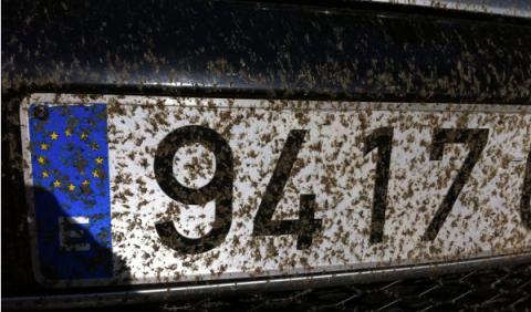 ¿Cuántos insectos mueren 'atropellados' cada año?