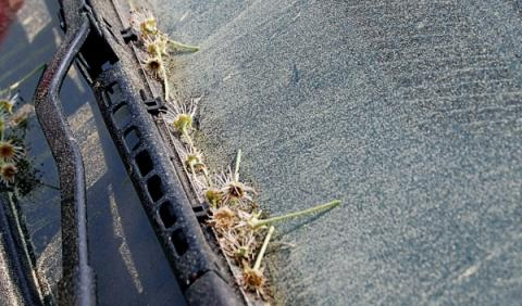 Limpiaparabrisas lleno de polen en primavera