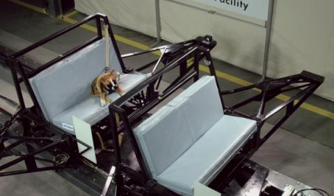 Center for Pet Safety's Dog Crash Testing